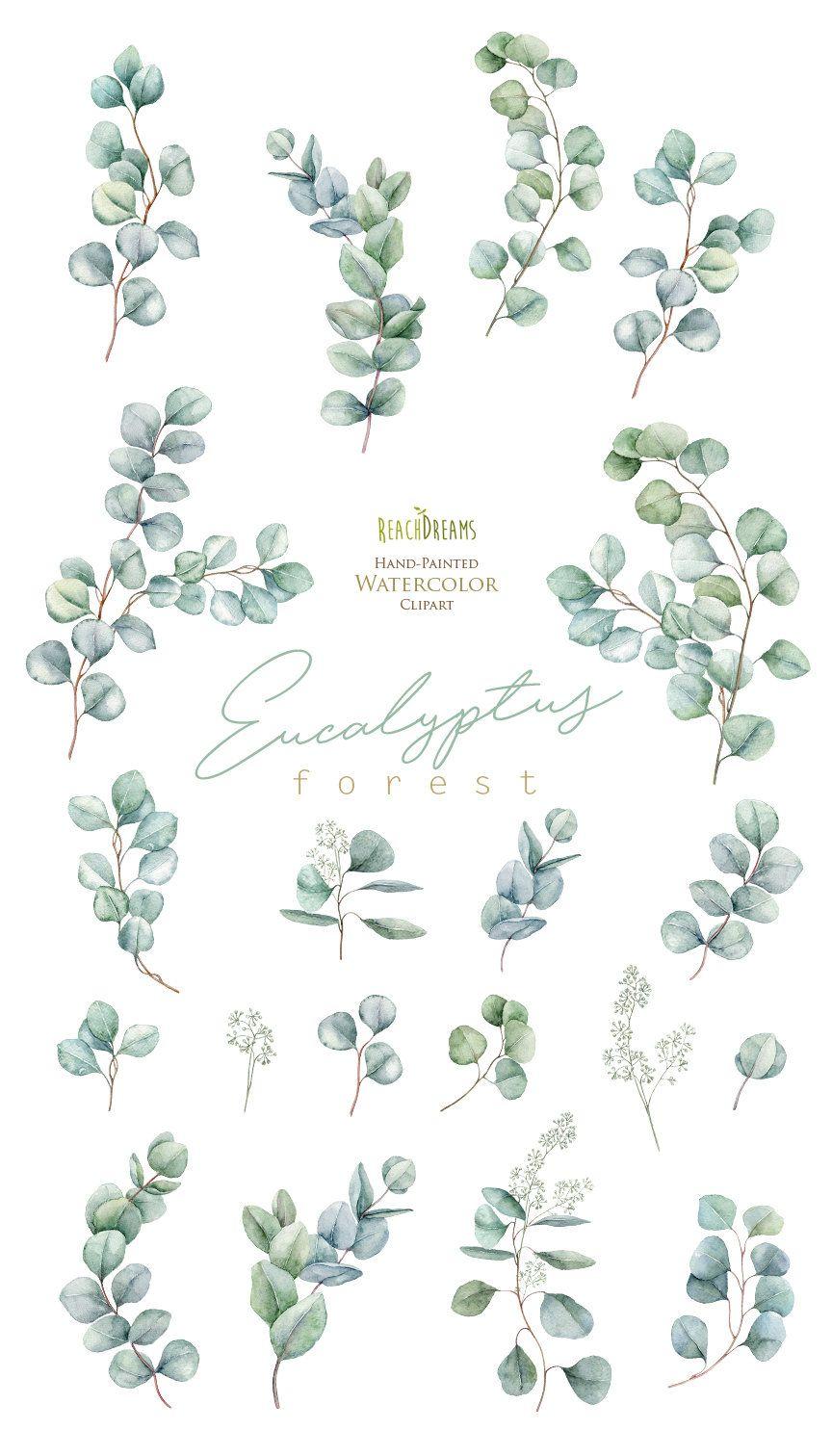 Eucalyptus. Watercolor Floral Clipart. Individual Elements. Green ...