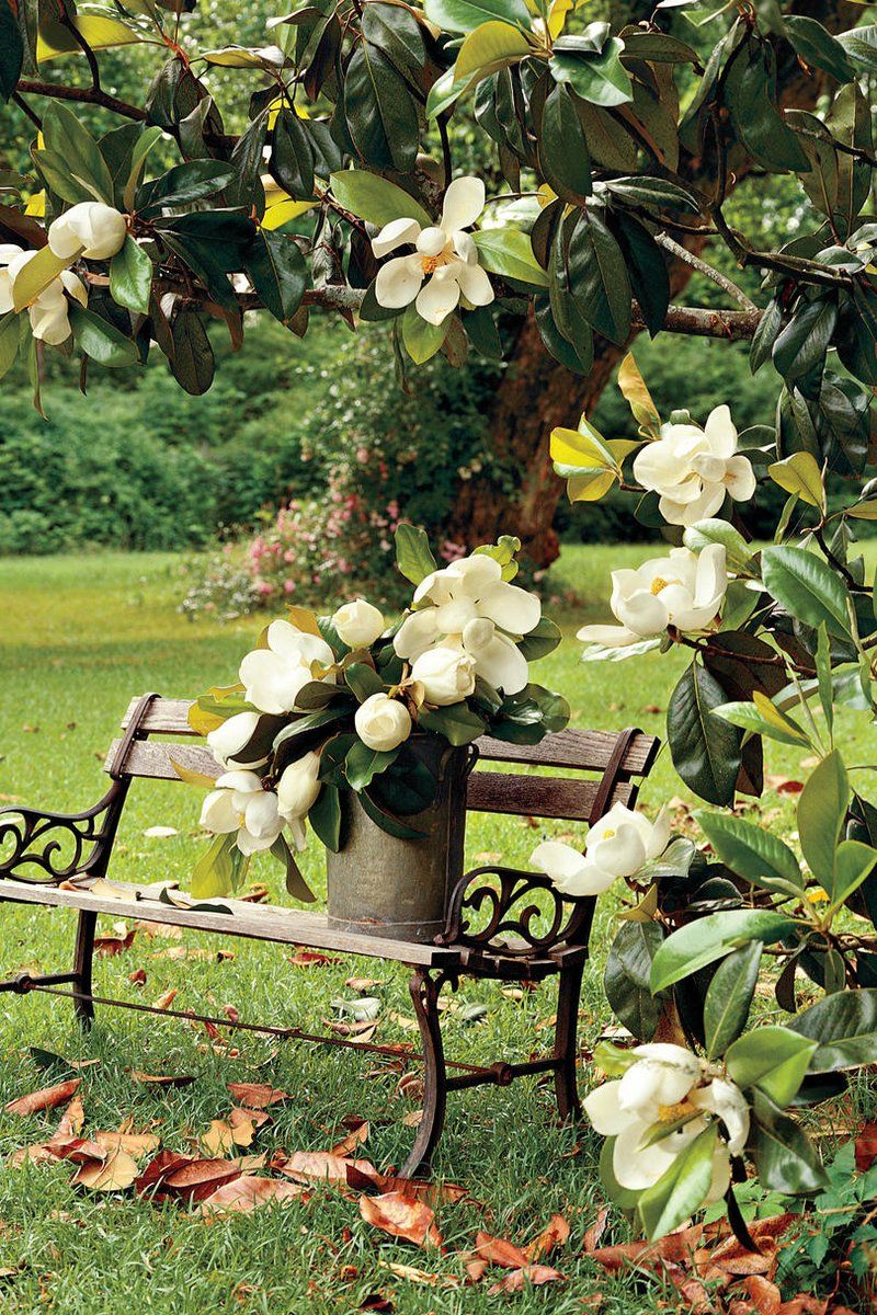 Flowering Southern Trees You Need to Plant Now Jardín de