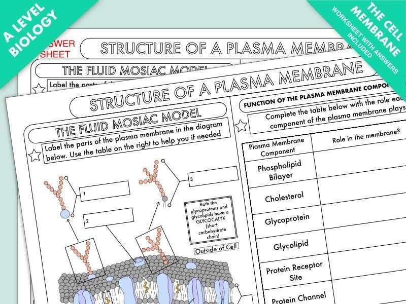 Cell Membrane Worksheet Answers A Level Biology Cell
