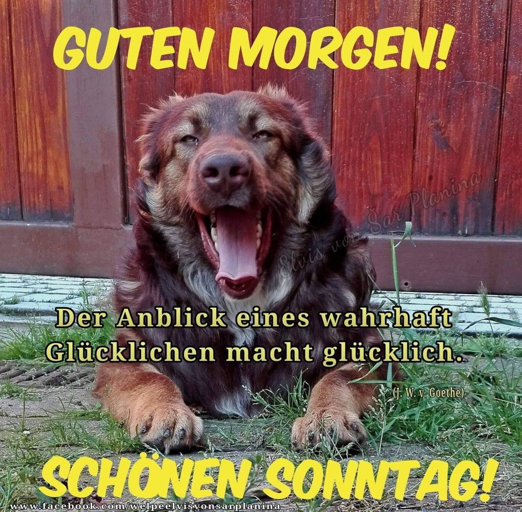 Moin Moin D Aus Niedersachsen Wir Senden Euch