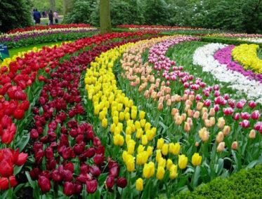 El jardín de las flores de Da Lat fue construido en 1985 ...