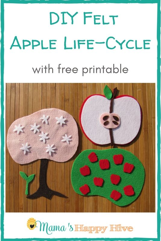 A beautiful DIY felt apple life- cycle activity with free printable. Enjoy hands-on learning about the parts of the apple and its life-cycle. - www.mamashappyhive.com