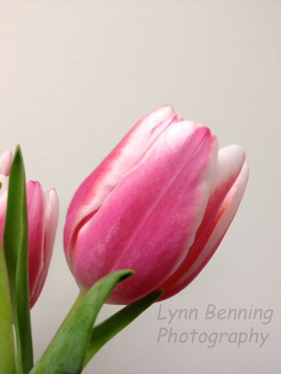 Tulip by LBENNINGPHOTO on Etsy, $25.00