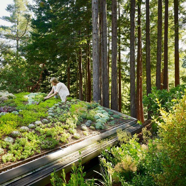 Mill Valley Cabins By Feldman Architecture Green Roof Rooftop Garden Roof Garden