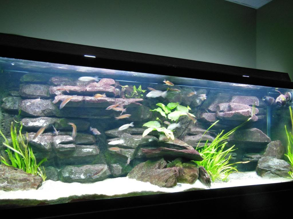 Aquarium fish tank diy - Diy 3d Background After 3 Years 3d Backgroundaquarium Ideasfish Tanks Marquisaquariumsthe