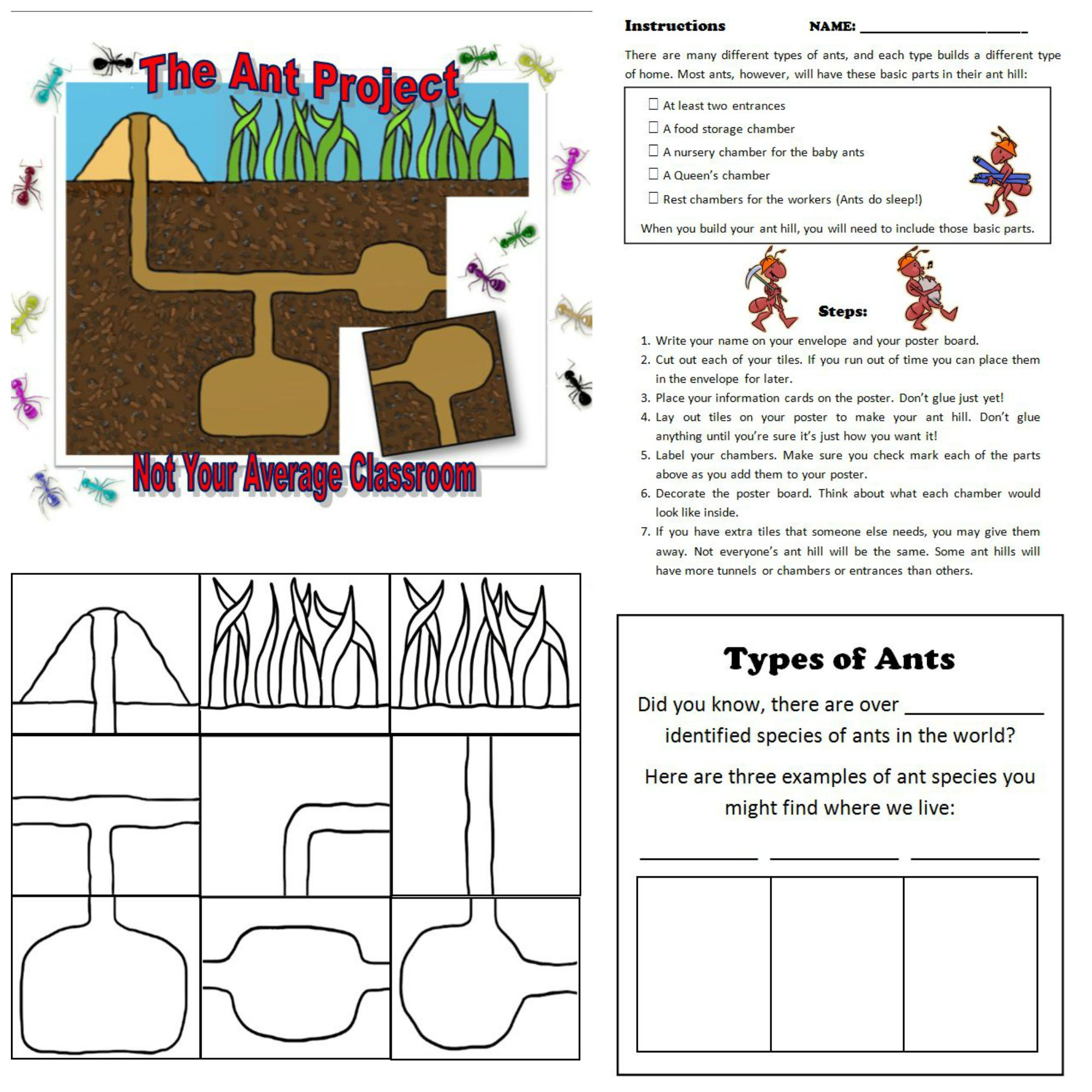 The Ant Project Research Poster Project Insect Unit