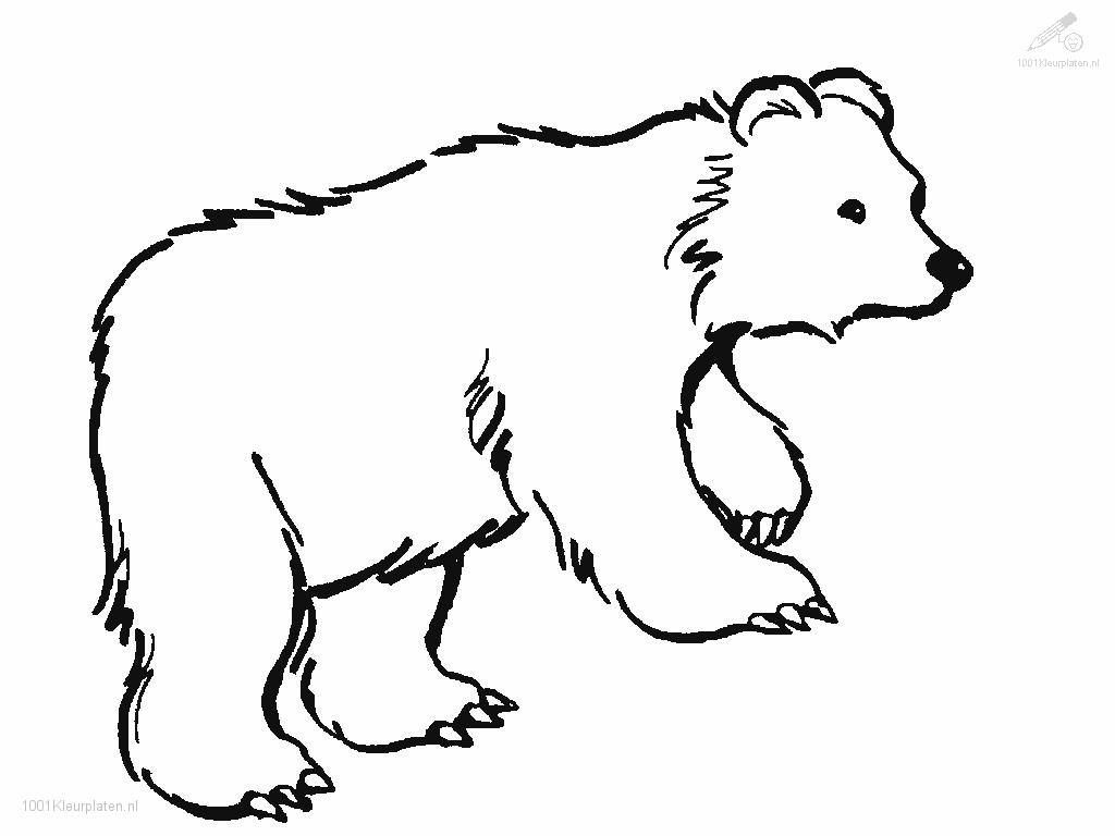 Animals Bear Bear Coloring Page Spesific Bear Coloring Pages