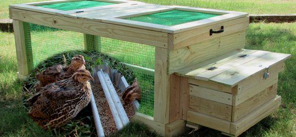 Quail Coop | Quail coop, Raising quail, Chickens backyard