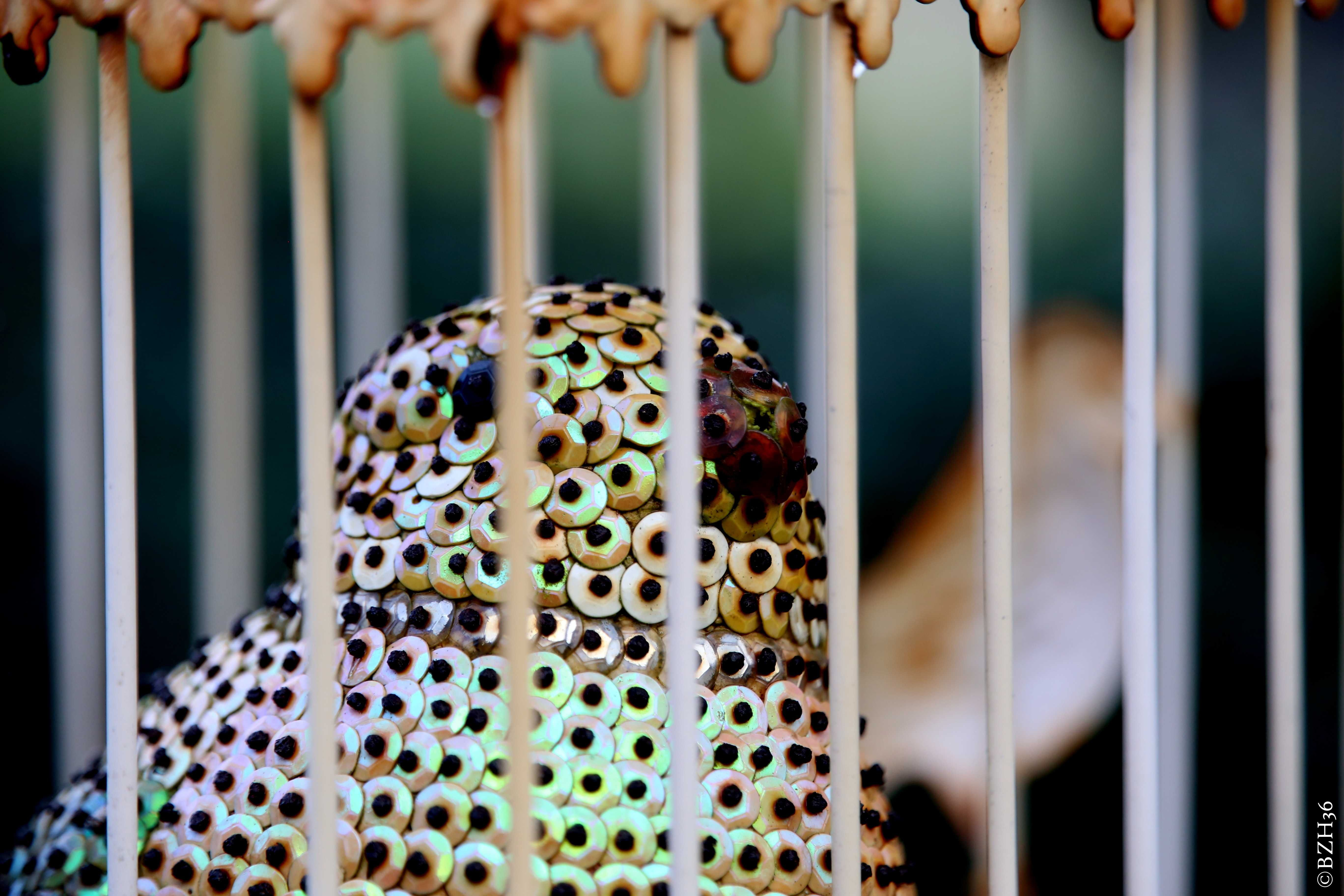 ©BZH36, oiseaux, cage