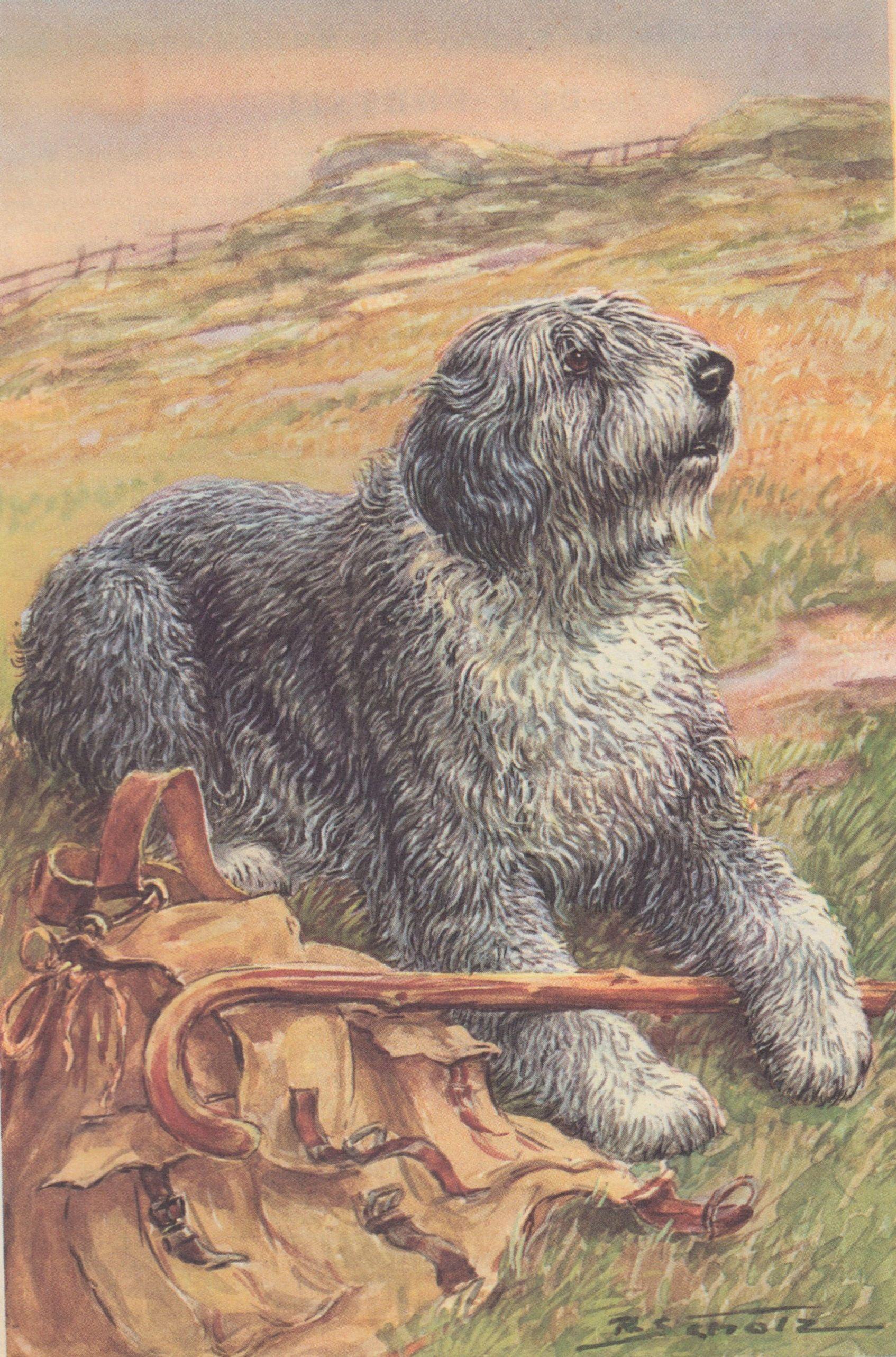 Vintage Old English Sheepdog OES Herding Dogs Vintage