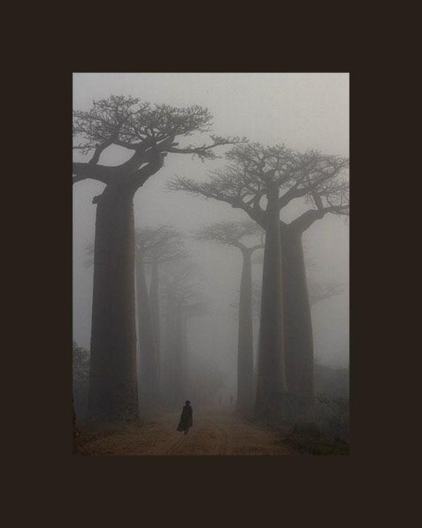 Wabi Sabi Scandinavia Design Art And Diy On The Move Baobab Tree Beautiful Tree Photo