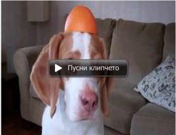 Куче си играе с портокал