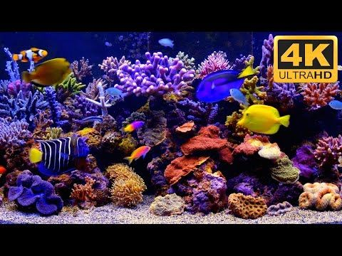 The Best 4k Aquarium For Relaxation Sleep Relax Meditation Music 2 Hours 4k Uhd Screensaver Youtube Akvaryum Dogal Doga