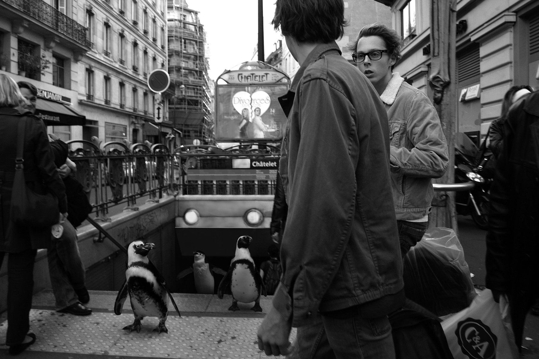 COOPH Ceslovas Cesnakevicius - Composite photo photoshop editing street photo with animals.