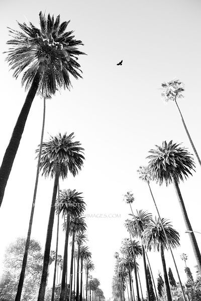 Palm Tree Images Black And White