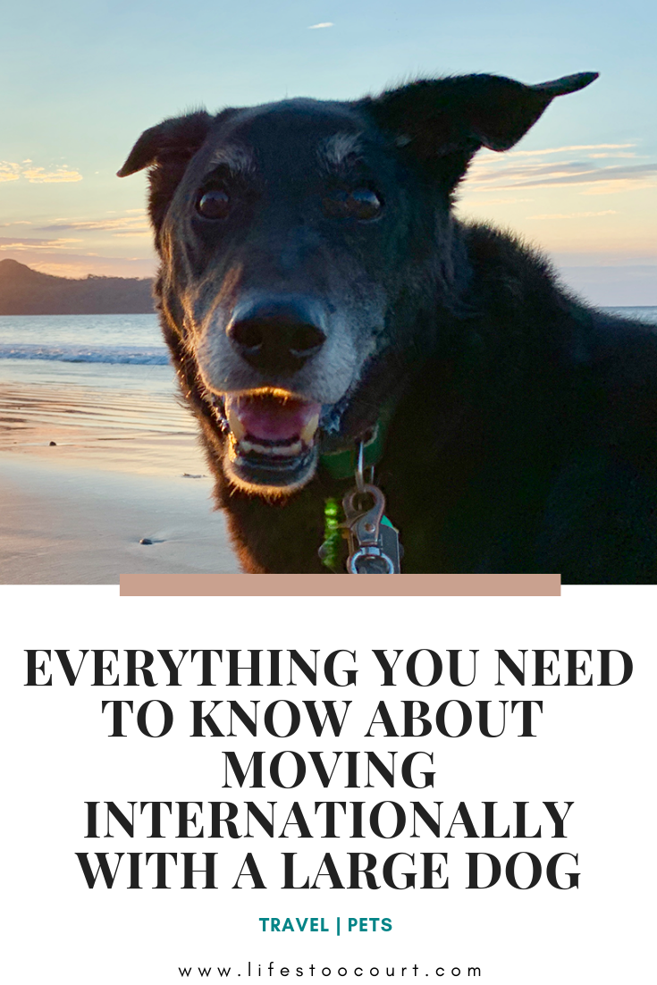 If You Re Planning To Move From The Us With Your Large Breed Dog And Feel Lost I M Here To Help In This Post I Ve Created Large Dog Breeds Dog Breeds Pet