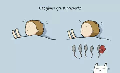 The value of cats