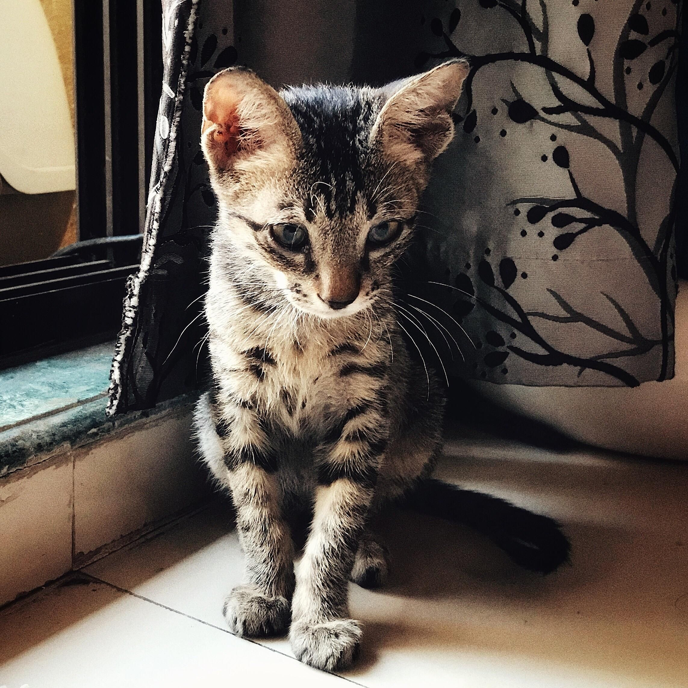 Best Food For 8 Week Old Kitten Recently Adopted This Bundle Of Joy Wall E First Time Having Kitten Please Suggest The Best Food For Kitten He Doesn T Like Kittens Canine Cute