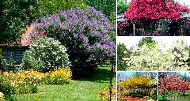 Conoce 10 rboles perfectos que realzar n tu peque o for Arboles para jardines pequenos