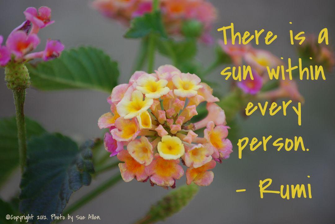 Rumi Quote   Rumi quotes, Belief quotes, Rumi