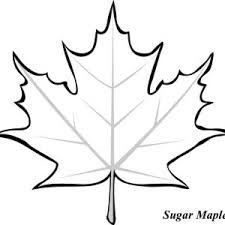 Sugar Maple Leaf The Kids Colored Large Pieces Of Butcher Paper Red Orange And Yellow One Colo Leaf Coloring Page Fall Leaves Coloring Pages Leaf Template