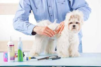 How To Detangle Matted Dog Hair 7 Lifesaving Tools Matted Dog Hair Dog Hair Schnauzer Dogs