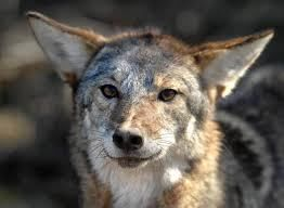 Man in yard mistakes coyote for neighbor's dog, gets bitten State attorneys general, led by California Democrat Xavier Becerra, argue the monthly payments to insurance providers are required under former President Barack Obama's health care law. Without them, consumers will face higher costs and insurers will ...and more » #healthcare #barackobama #dog #insurance #support #coyote http://readr.me/7cuyf
