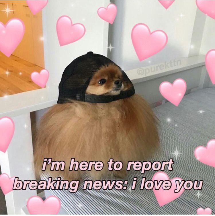 Pin By Sarah Hafida On Memes Cute Memes Love Memes Wholesome Memes