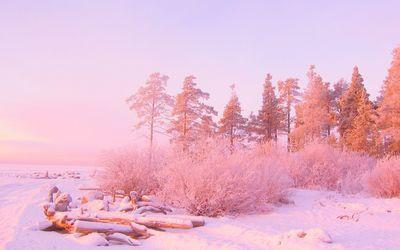 Pink sunset light over snowy forest 1920x1200 HD Desktop Wallpaper