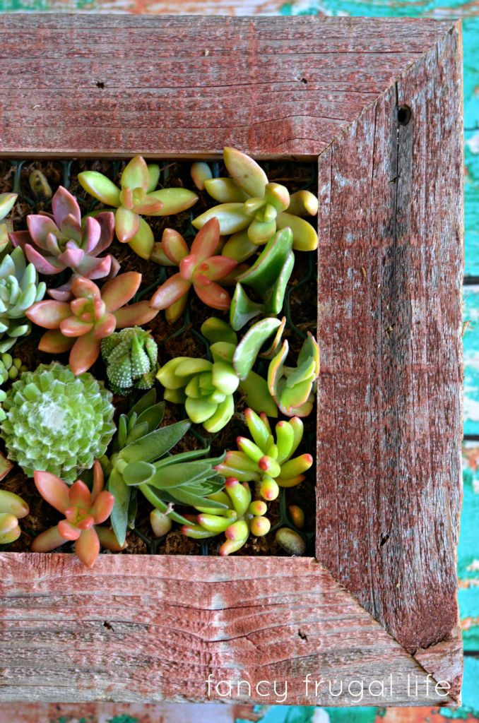 Fancy Frugal Life Says The Succulent Living Wall Planter Kit Was Most Exciting Housewarming Gift