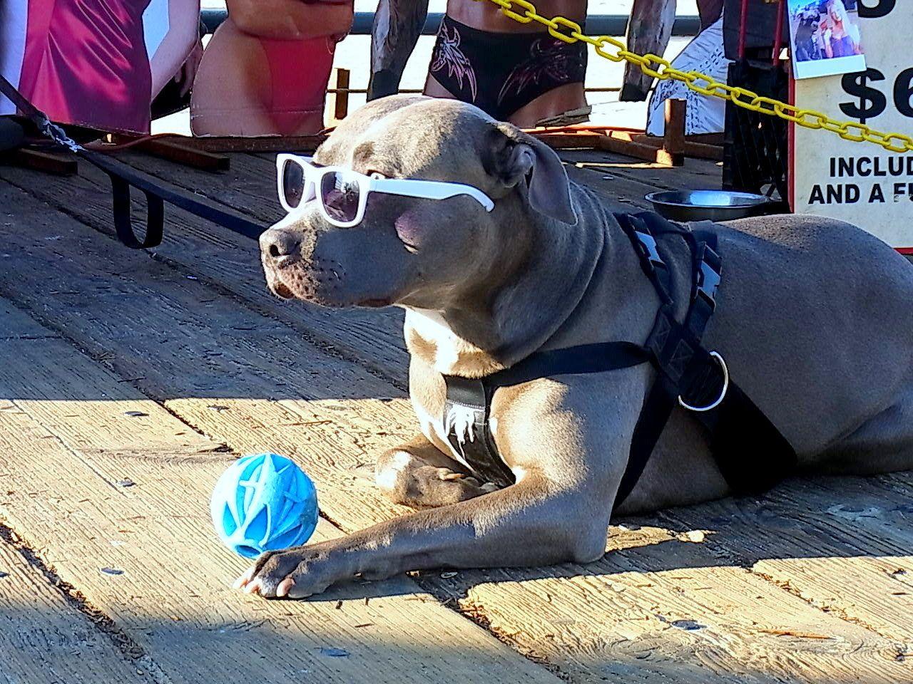 Dog 犬 (サンタモニカ)