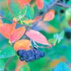 Best Trees & Shrubs for Fall Color | Midwest Living