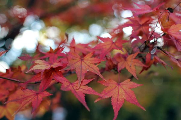 Get Your Fall Fix 10 Best Places To See Autumn Leaves In Southern California Autumn Leaf Color Fall Day Trips