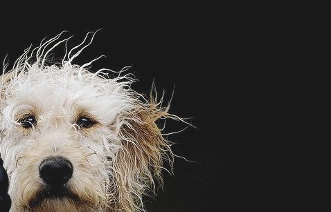 Bad Hair Day Baby Dogs Dog Photography Dogs