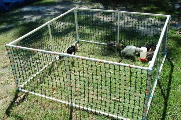 News baby chicken play pen playpen backyard chickens
