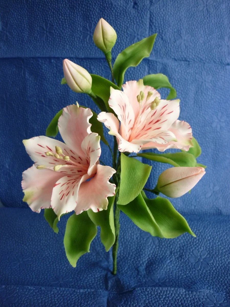Astromeria To Do Pinterest Sugar Flowers Gum Paste And Flowers