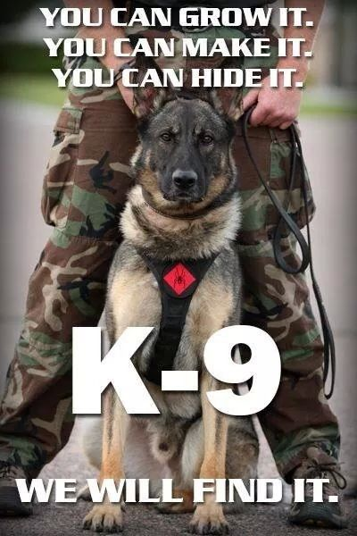 K9 Dogs Are Amazing Heroes Of Law Enforcement Military Working
