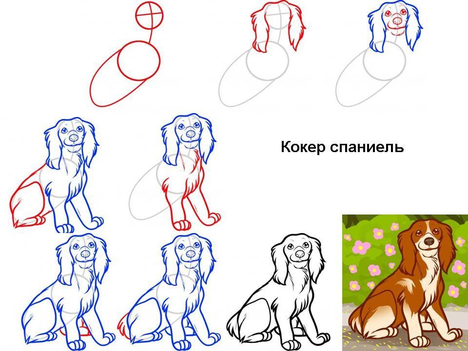 9 10 Let Uroki Risovaniya Kak Narisovat Sobaku 17 Porod Vse O Detyah Dog Art Projects Drawing Tutorial Easy Animal Drawings