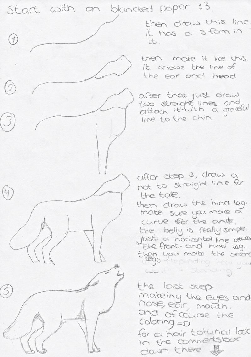 How to draw a wolf step by step | How to drawings step by ... | 798 x 1136 jpeg 104kB