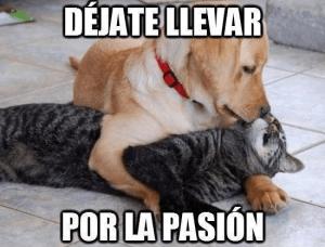 Memes Chistosos De Gatos Y Perros 9 Memes Perros Meme Gato Memes De Perros Chistosos