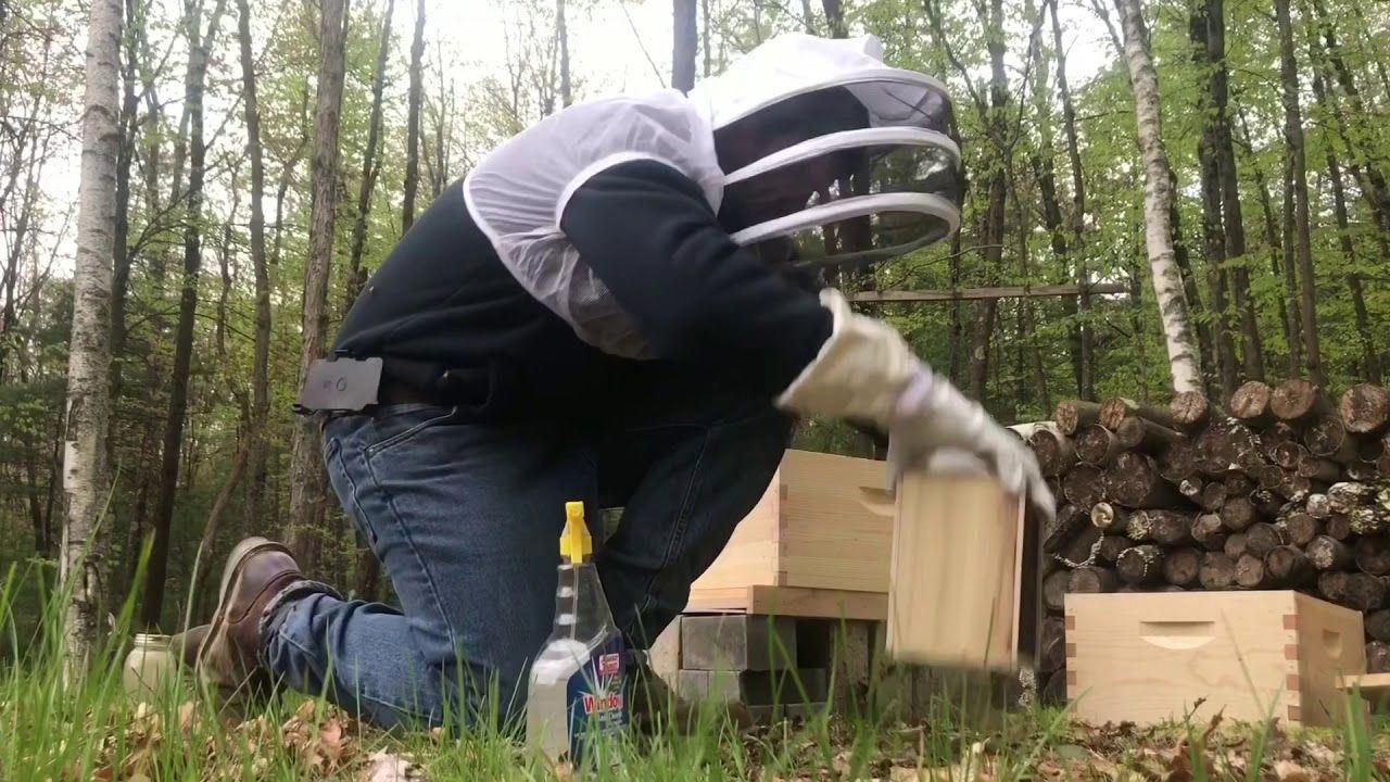 Beginner beekeeping installing a package for the first