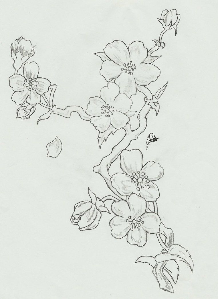 Blossom Flower Line Drawing : Black and white cherry blossom tattoo designs google