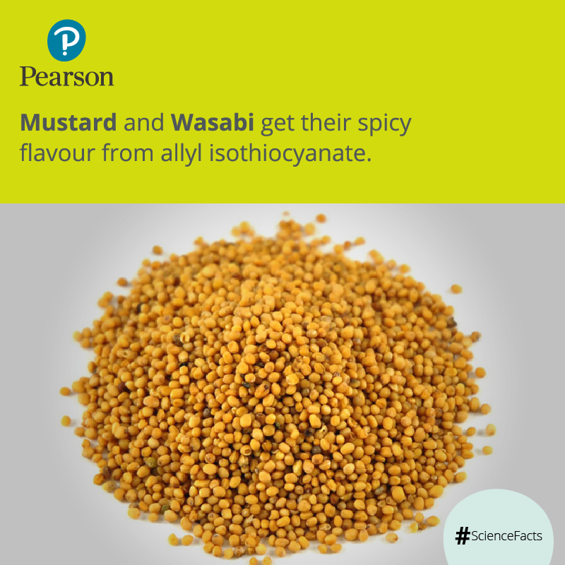 Mustard seed gets its earthiness and pungency only when ...