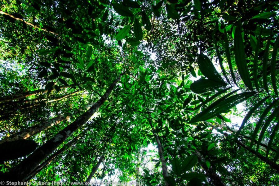 The Amazon Rainforest Tree Canopy | Travel Dudes Social Travel Community & The Amazon Rainforest: Tree Canopy | Travel Dudes Social Travel ...