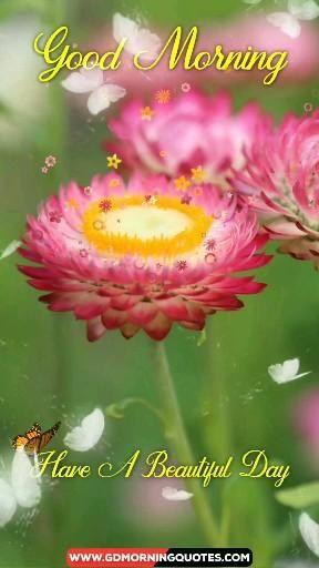 Beautiful good morning flowers video, flowers, beautiful video