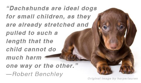 Doxies Dachshunds Wiener Dogs Whatever You Call Them They Re