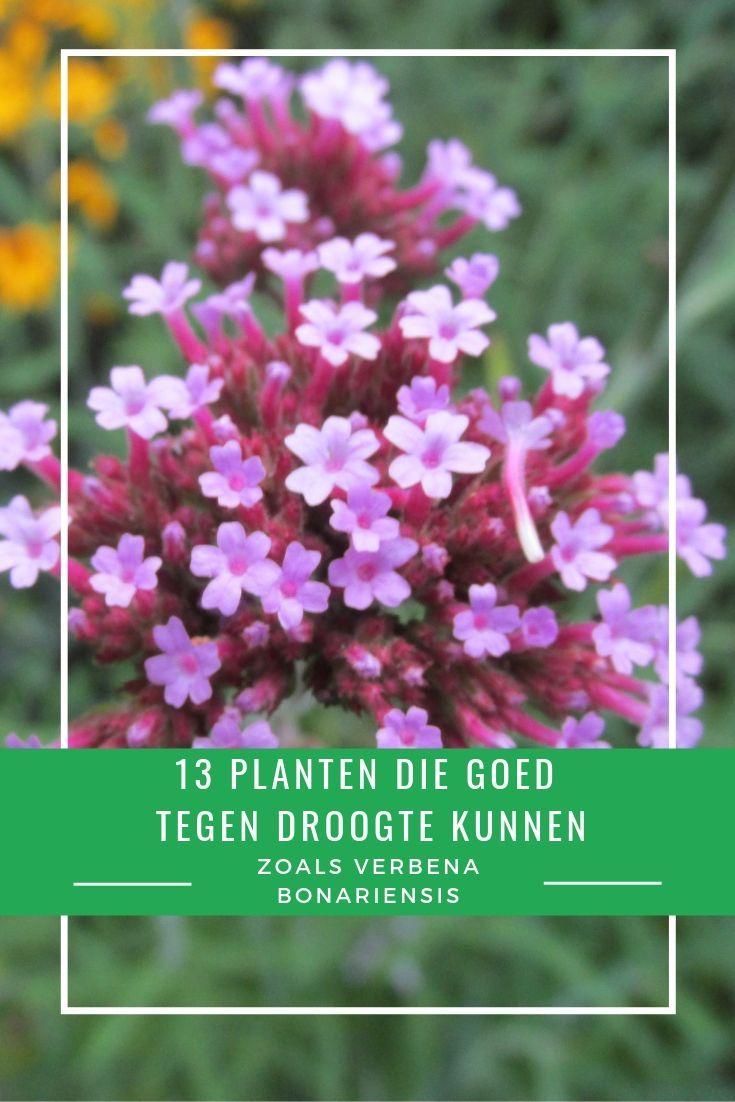 Verrassend 13 planten die goed tegen droogte en droge grond kunnen | Droge LS-27