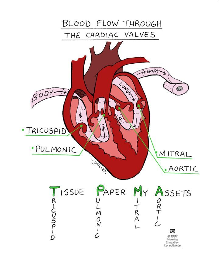Mnemonic For Blood Flow Through The Cardiac Valves T M P A