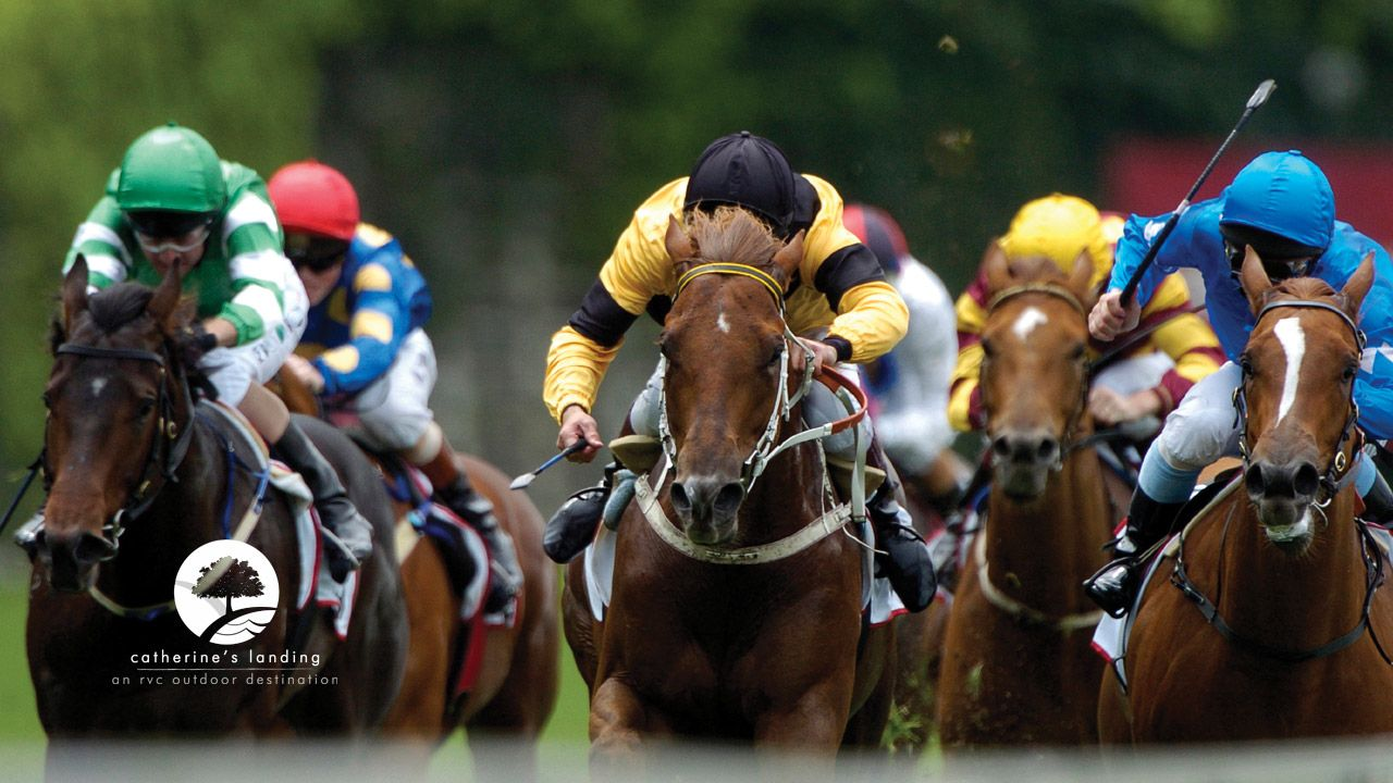 Horse betting tips san diego sturm local bitcoins register