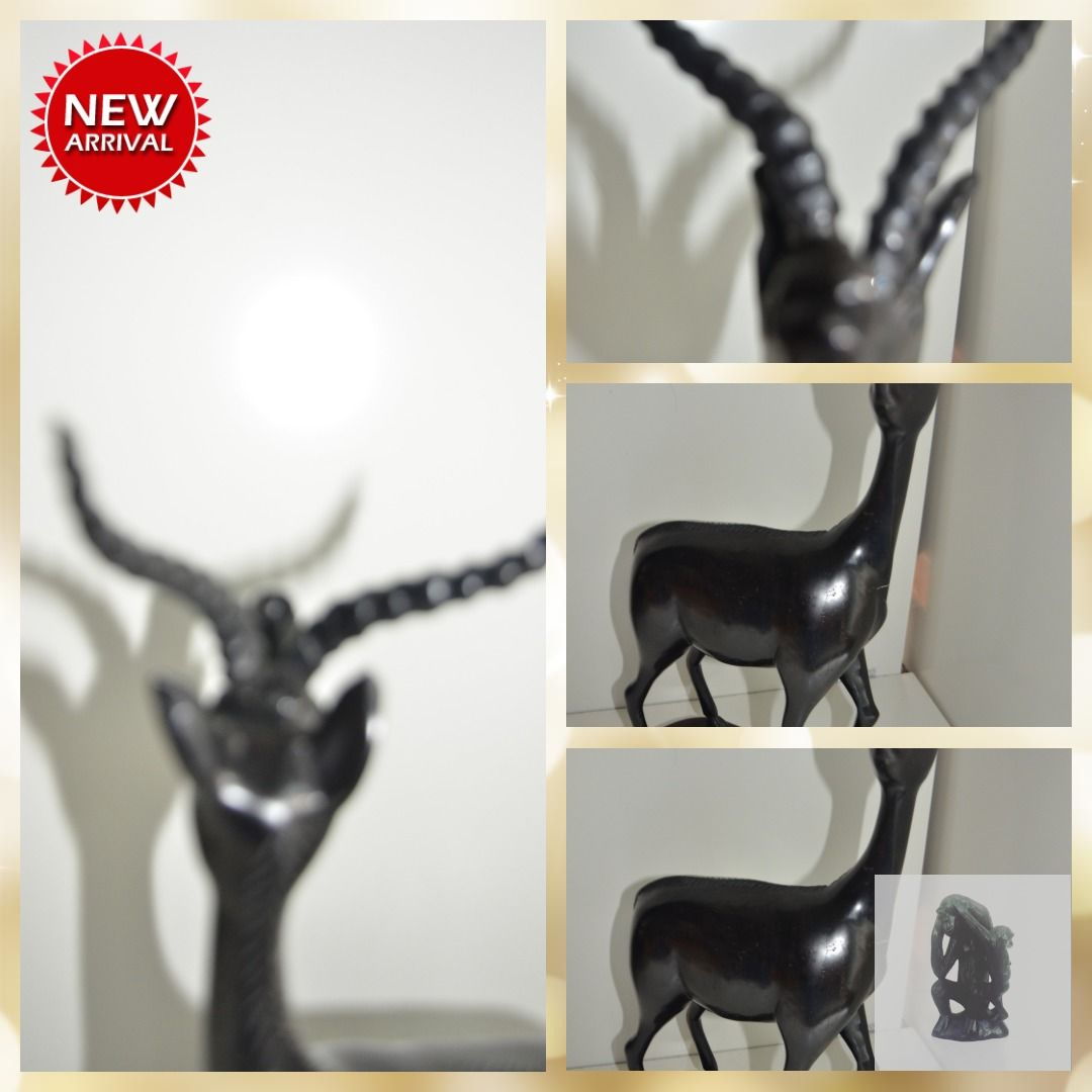 A Beautiful male Antilope from Congo Rare find